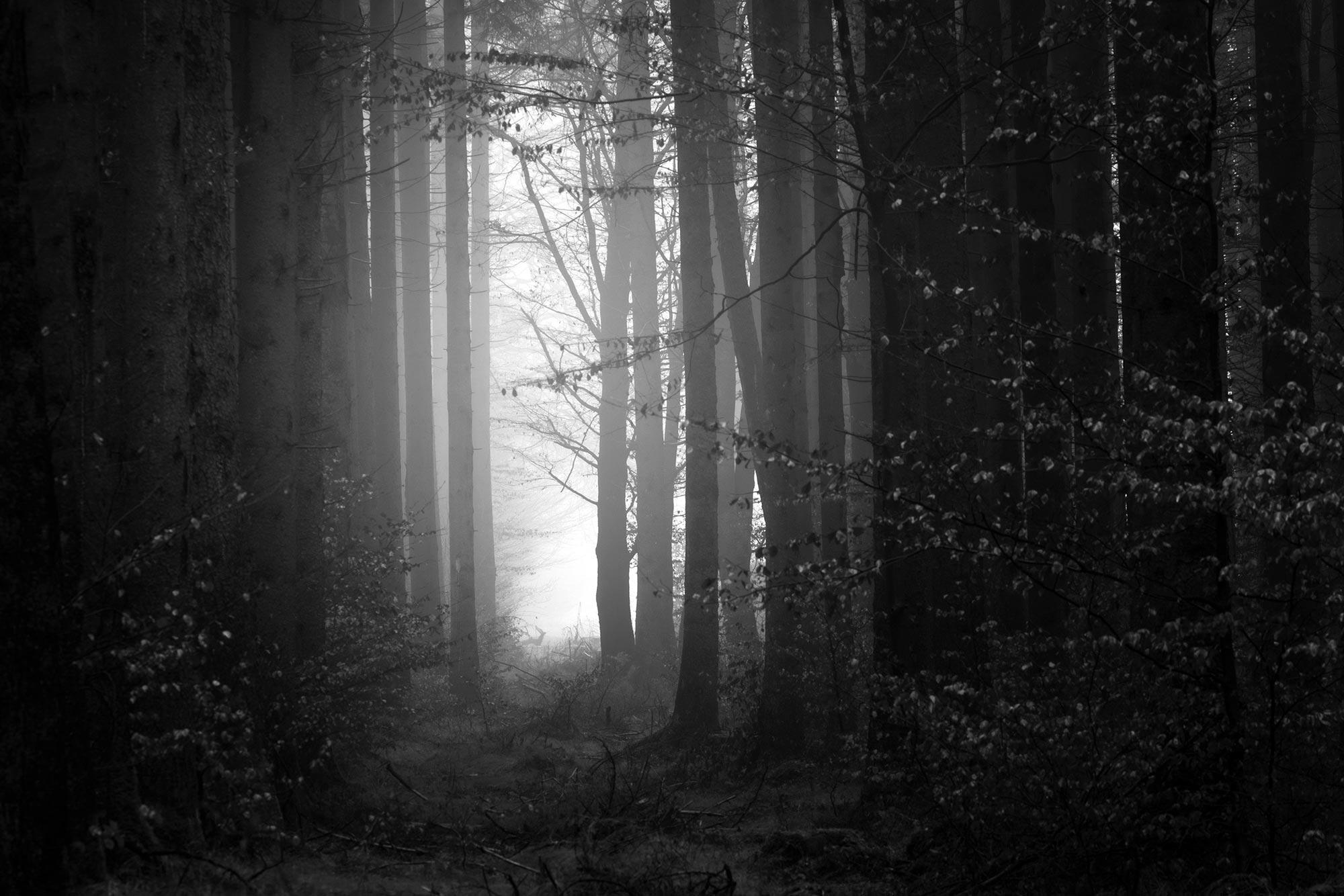 https://www.kobedigital.com/wp-content/uploads/2020/12/ServicesStudios_OurApproach_Trees_01.jpg